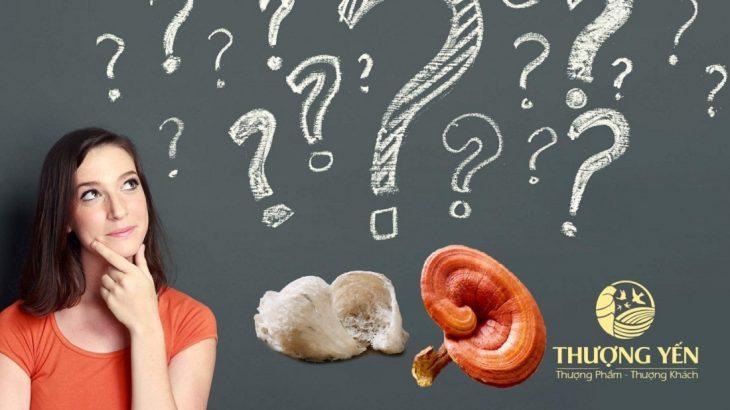 Nên dùng tổ yến hay nấm linh chi để bồi bổ sức khỏe?